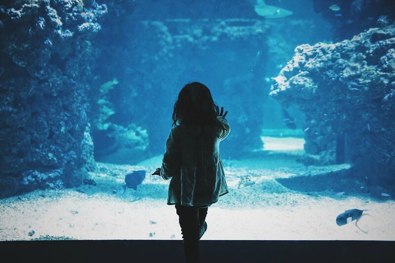 little girl touching window of fish tank at the aquarium