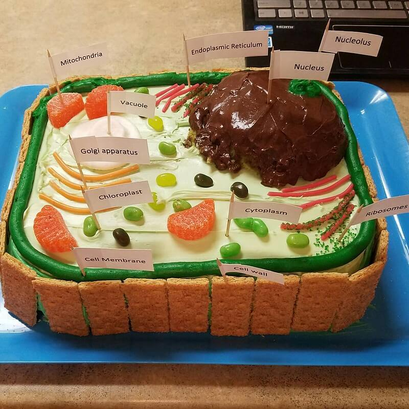Making Your Own Plant Cell Model At Home Is THIS Easy by ...