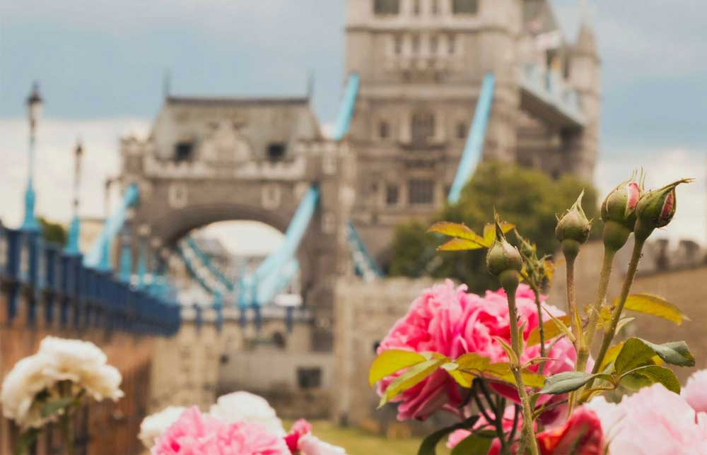 flowers in front of tower bridge