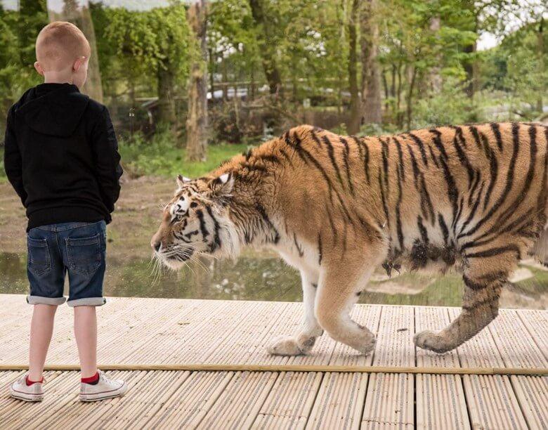 kid in safari park north england