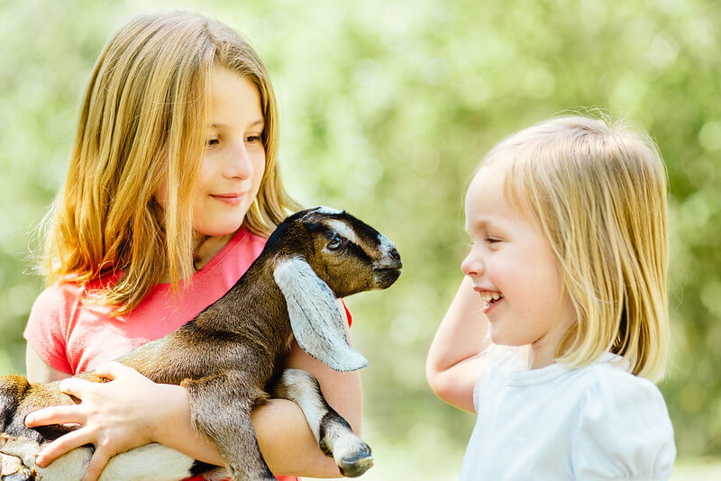 Children making goat puns to each other while holding a goat