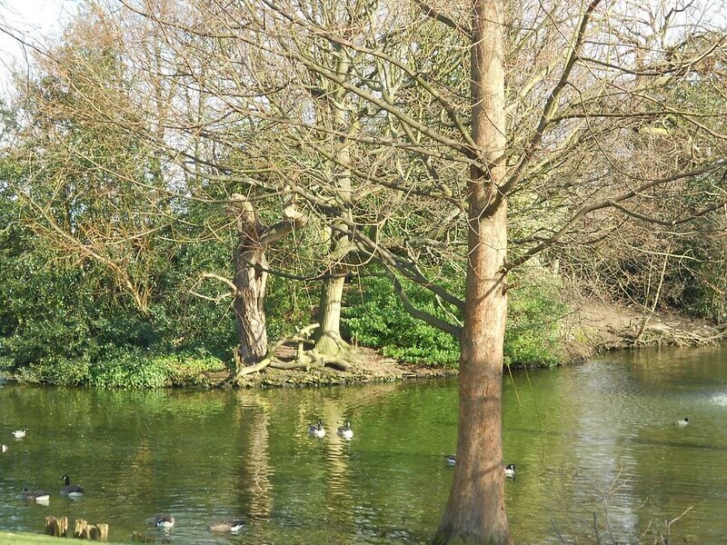 There's plenty of wildlife to see in Springfield Park, East London