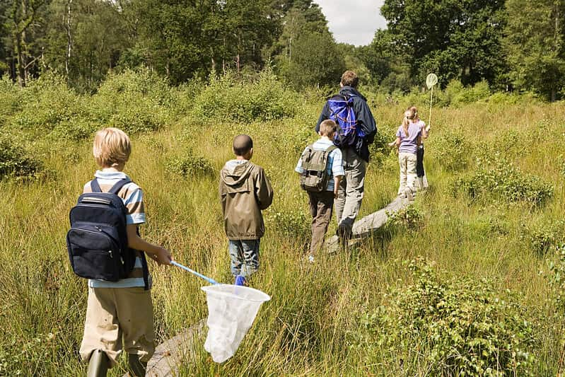 A family goes through tall grass with a net to look for minibeasts.