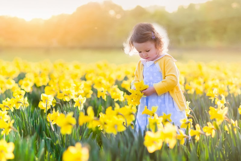 Toddler girl with a girls' name beginning with E playing in daffodils.
