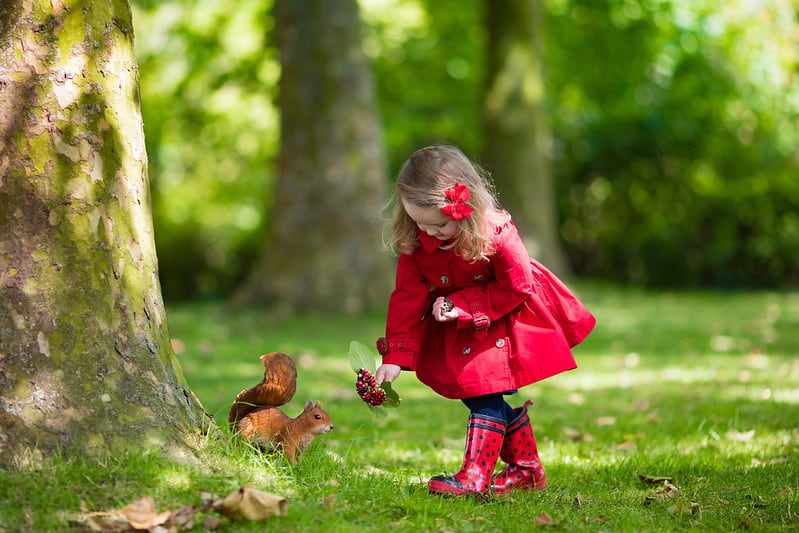 Little girl wearing a red coat feeding a squirrel red berries.