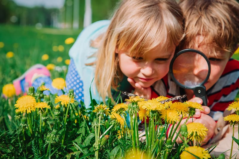 Two small children looking at a butterfly on some dandelions through a ma