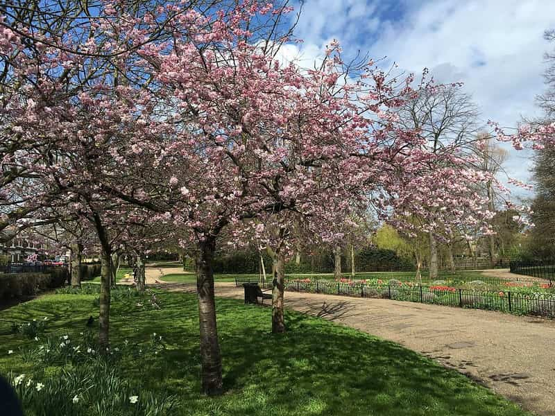 Sunny day at Manor House Gardens, Lewisham, with trees in full bloom.