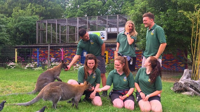 Zookeepers at Battersea Zoo feeding kangeroos