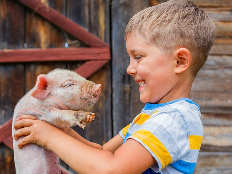 Young boy holding up a piglet and smiling at Reddish Vale Farm.