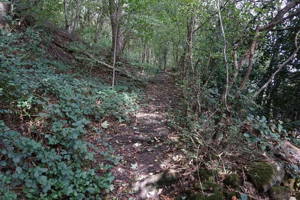 Walking path through the forest-like Beaumont Park.