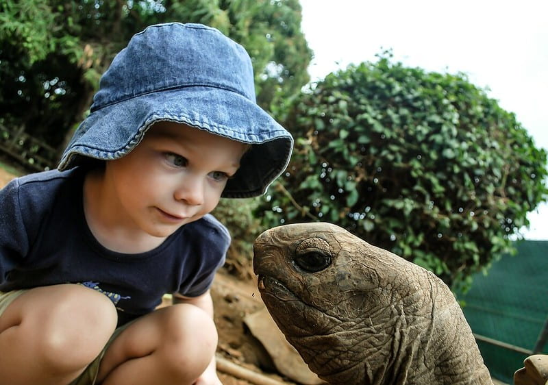 Boy in a sun hat kneeling down to look closely at a turtle.
