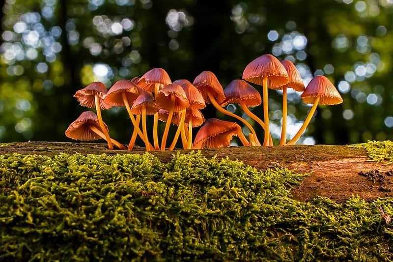 Mushrooms growing on the bark of a tree.