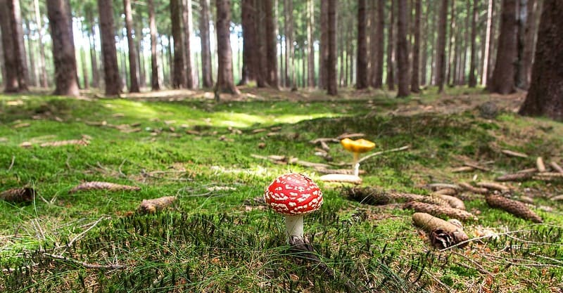 A toadstool growing on the ground in the woods.