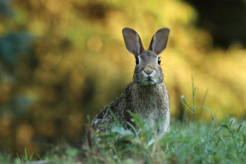Rabbit sitting on the grass.