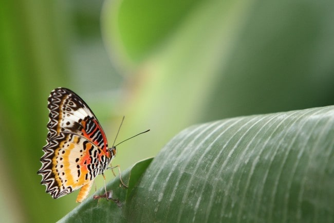 A pretty patterned butterfly on a leaf.