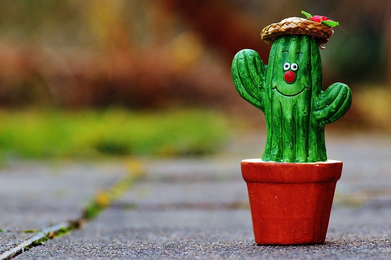 A funny cactus in a pot with a red nose and wearing a straw hat.