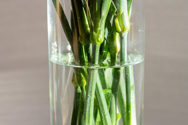 Green stems of flowers in water in a glass vase.