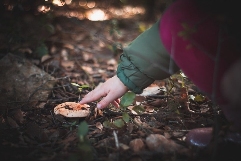 Small child reaching out to touch a mushroom growing in the ground.