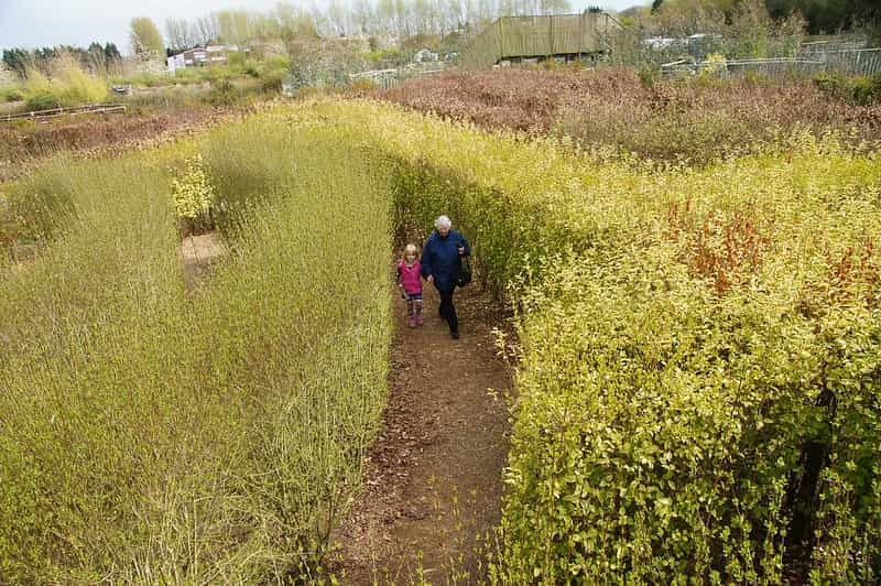 A young girl and her grandmother exploring the hedge maze.