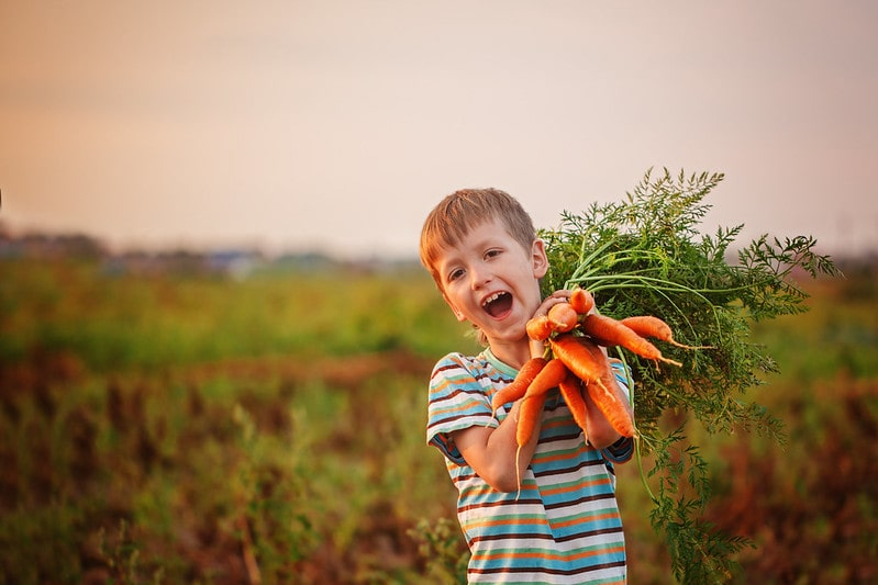 Boy holding a bunch of carrots he's just picked.