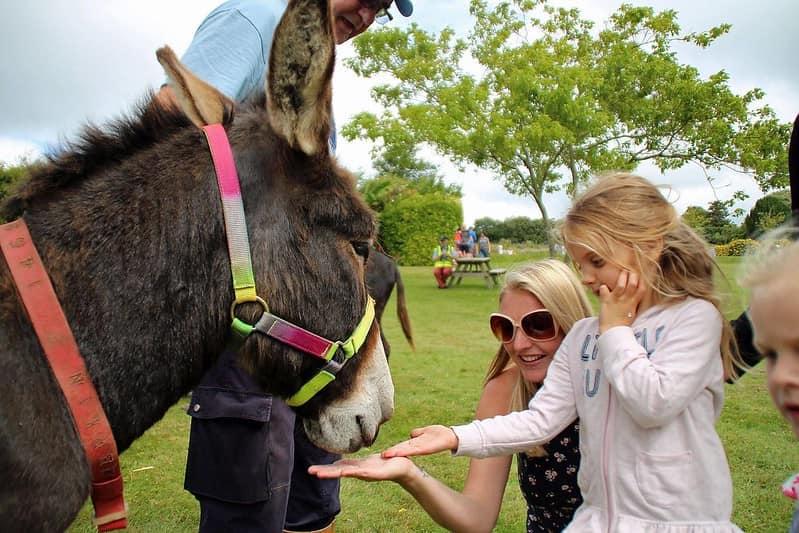Little girl feeding a donkey at the farm.