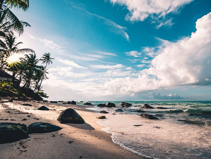 Beautiful beach with waves crashing on the shore and palm trees.