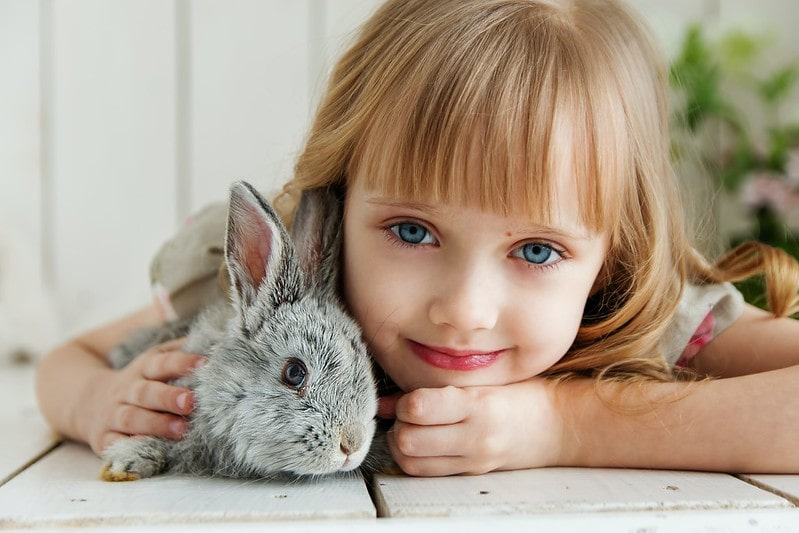 Little girl lying on her stomach on a white wooden floor with a grey bunny in her arms.
