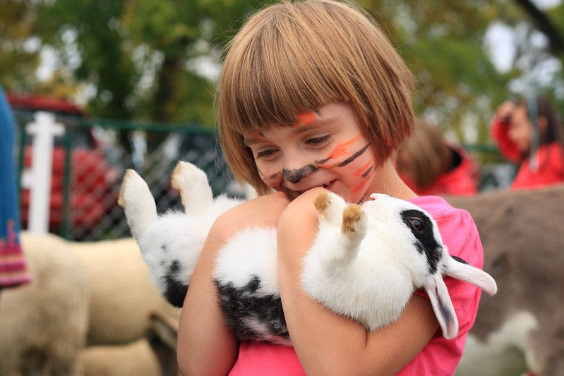 Little girl with her face painted like a tiger holding a white and black rabbit.