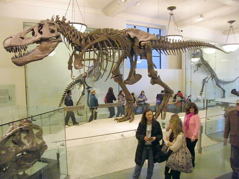 Dinosaur fossil at the Natural History Museum, London.