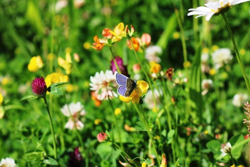 Purple butterfly sat on a yellow flower in a summer garden.