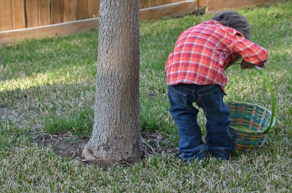 Little boy in the garden bending down next to a tree to inspect the ground for minibeasts.