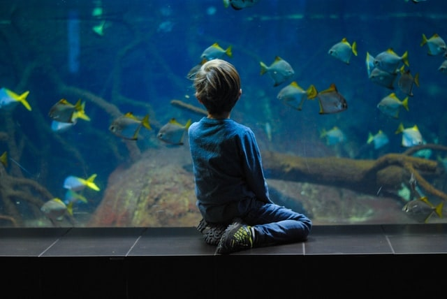 Young boy sat on the floor of the aquarium looking at the fish swimming in the fish tank.