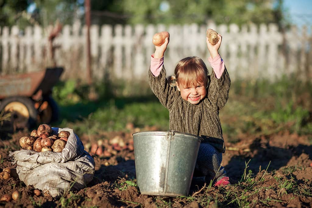 Little girl sat on the ground in the garden with a bucket of picked potatoes, holding up two in her hands.