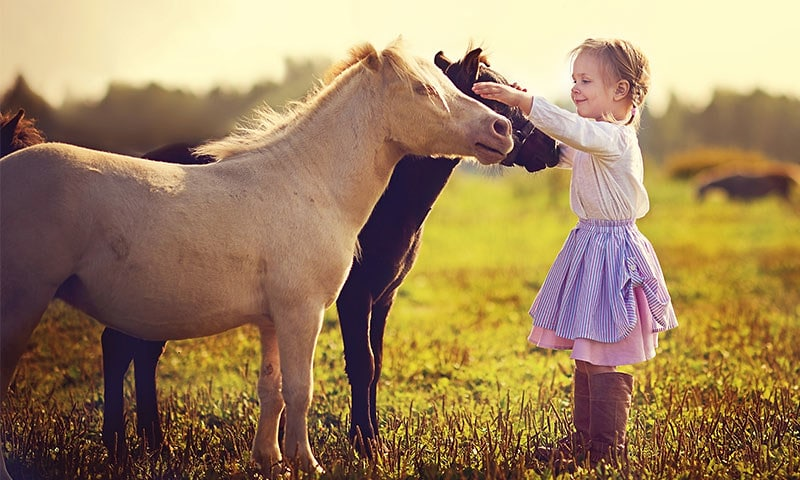 Little girl in a field petting two horses.