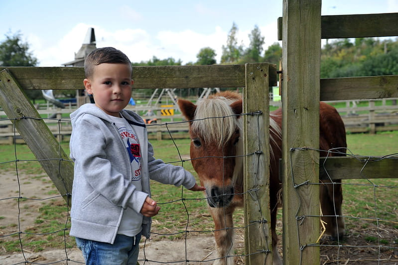 Boy standing with a pony handing it food at Kent Life farm.