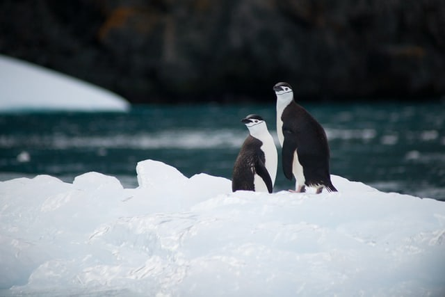 Two penguins standing together on an iceberg.