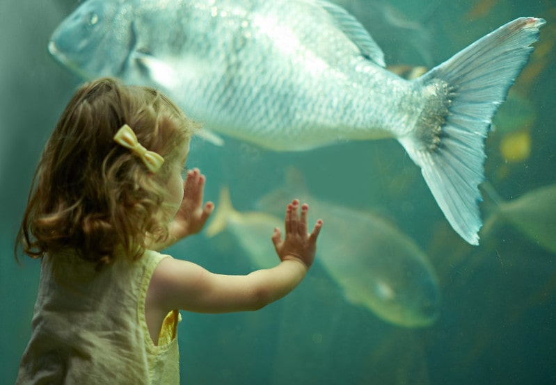 Little girl standing with her hands against the fish tank looking at a big fish at Blue Reef Aquarium.