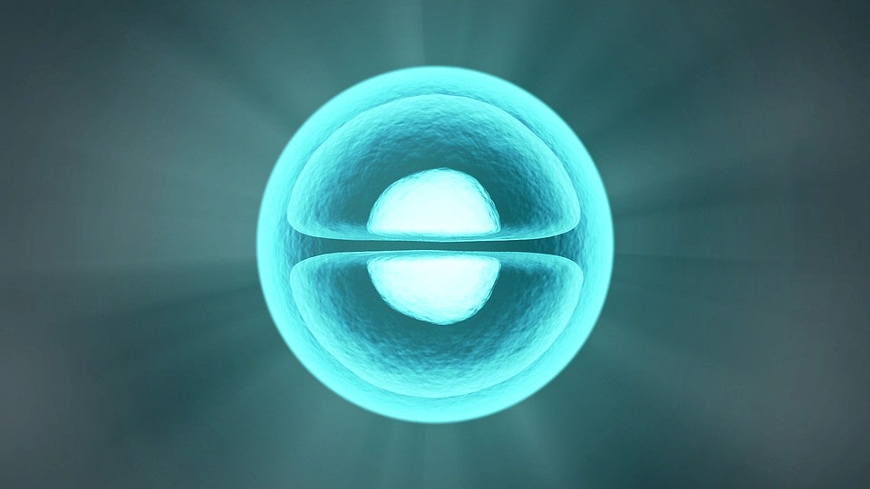 Image of a cell splitting during cytokinesis.