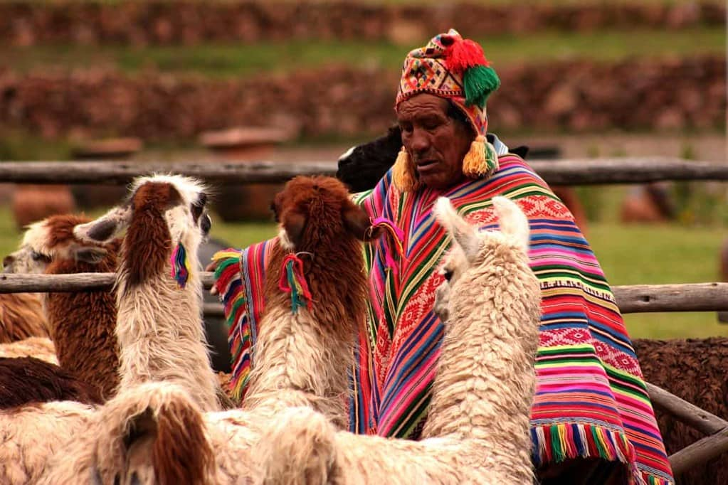 Peruvian man, wearing a colourful Peruvian knitted poncho and hat, looking at his alpacas.