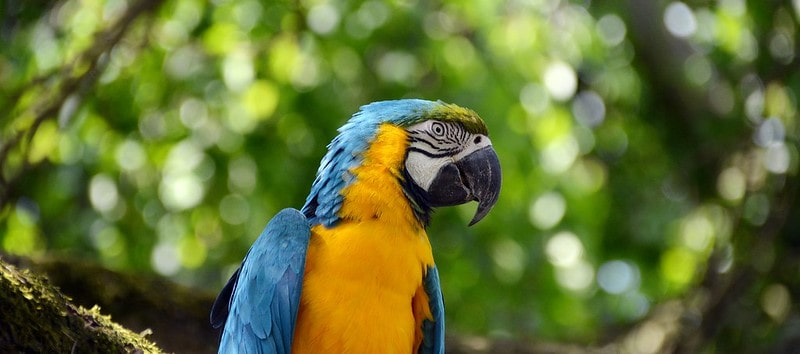 A yellow and blue parrot perched on the brand of a tree.