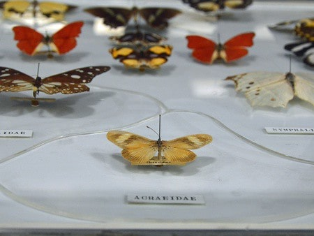 Display of different types of butterflies at the Zoology Museum.