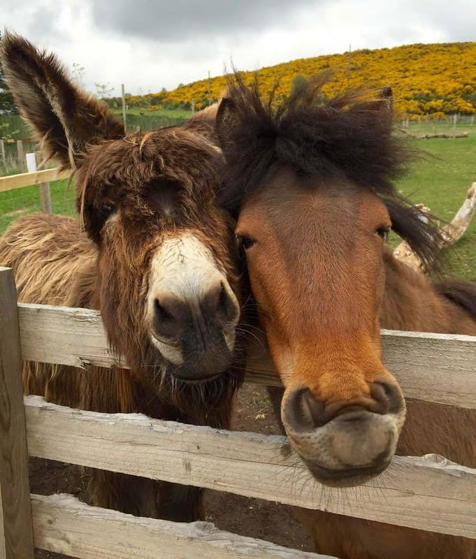 Two brown horses at Wynford Farm park.