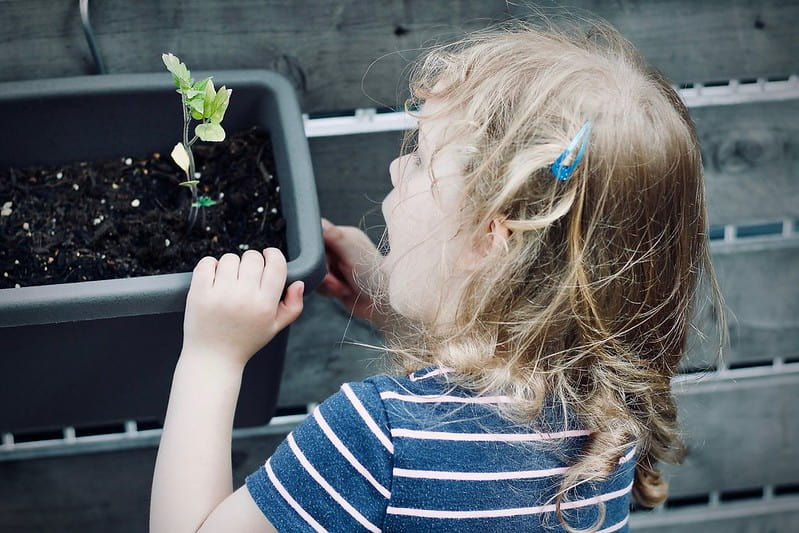 Little girl, wearing a striped top, amazed when looking at a growing plant in a pot.