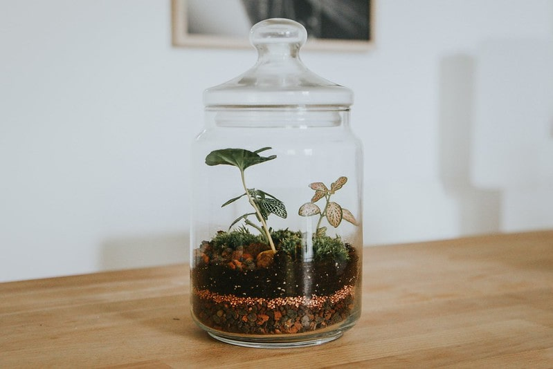 Plant in a glass jar with layers of soil and rocks.