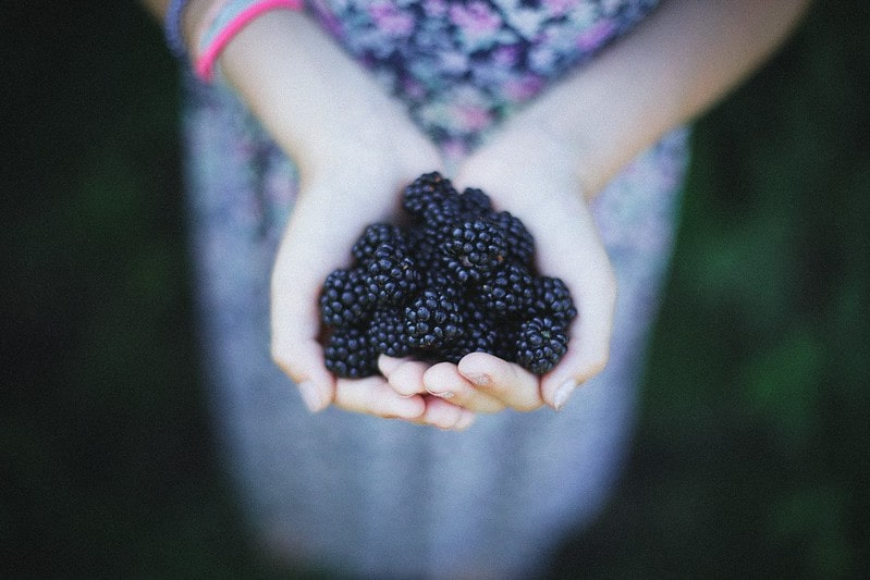 Hands holding out a large handful of freshly picked blackberries.