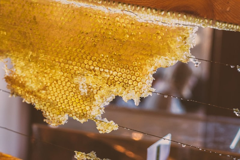 Fresh honey on the honeycomb hanging on a wire.