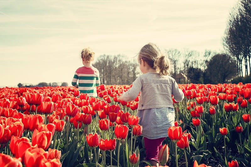 Two kids walking through a field of red tulips.