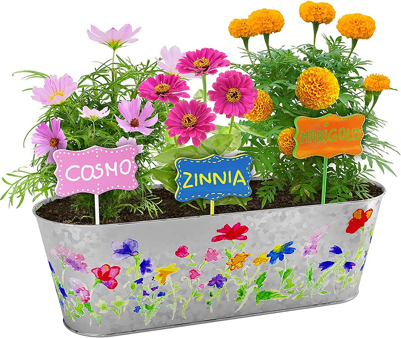 Paint & Plant Flower Growing Kit.