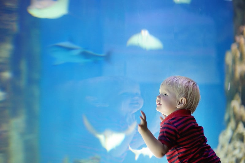 Toddler presses his hands against the fish tank as he marvels at the fish swimming.