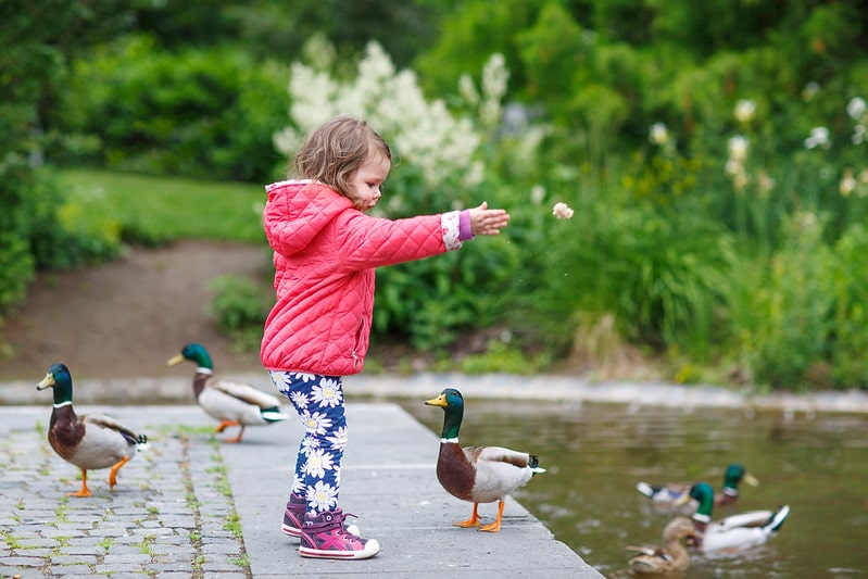 Little girl standing by the pond feeding the ducks on a family day out in Newmillerdam.